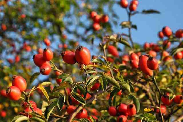 Léčivé bylinky v říjnu