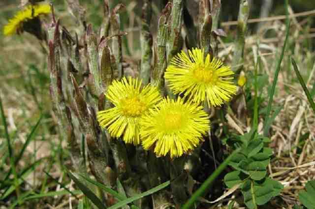 Léčivé bylinky v březnu