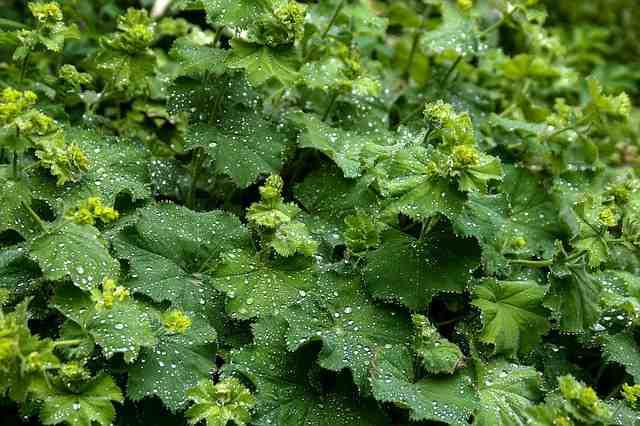 Léčivé bylinky v červnu