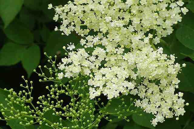 Léčivé bylinky v květnu