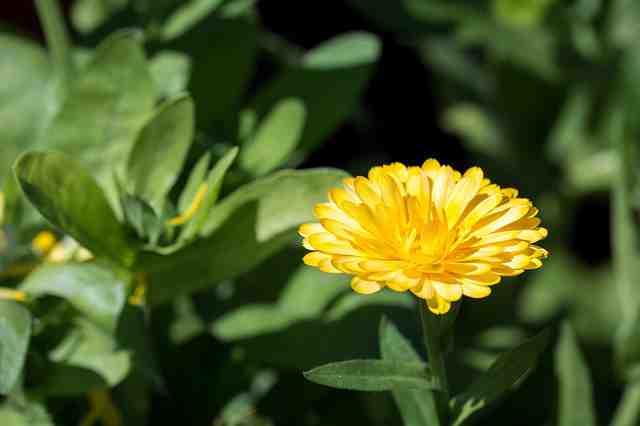 Léčivé bylinky v srpnu
